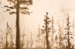 """Forest in the Fog"""