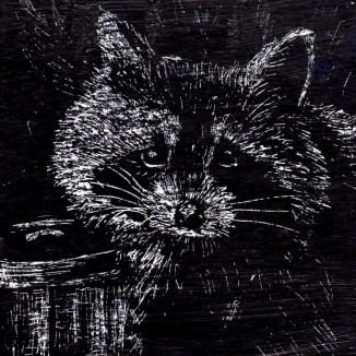 15-Rocky-Raccoon